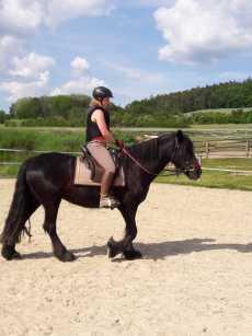 Sattel Doma Classica auf Dales Pony Stute
