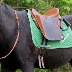 El Primero op Connemara Pony