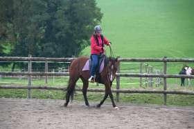 Ibero Barock on Quarter Horse