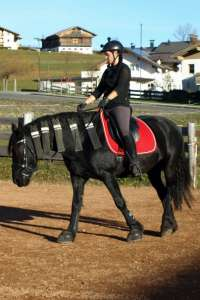Saddle Dressage Andaluz on Friesian Anja