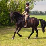 Lisa E. aus Österreich: (OEPS Working Equitation Lehrwart) schreibt gerade an Ihrer Doktorarbeit Dr. med. vet. und startet seit ca. 2 Jahren mit Ihrem P.R.E. Gorri in der Working Equitation.