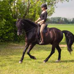 Lisa E. met Iberosattel op PRE Gorrion bij de Working Equitation