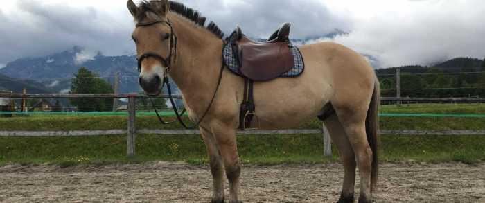 Noren Fjord Paard