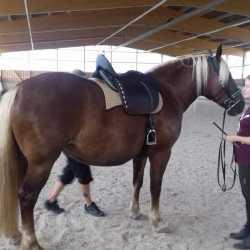 Mareike F. & Mira: Sevilla Sattel für Jungpferd - Schwarzwälder Stute