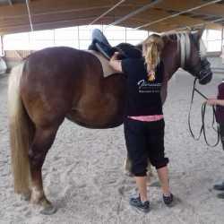 Mareike F. & Mira: Sevilla Sattel für Jungpferd - Schwarzwälder Pferd