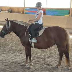 Mareike F. & Mira: Sevilla Pferdesattel für Jungpferd - Kaltblut