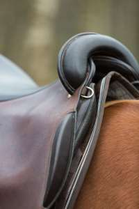 Quarter Horse Luke with Iberosattel - Fotografin: Sandragrafie