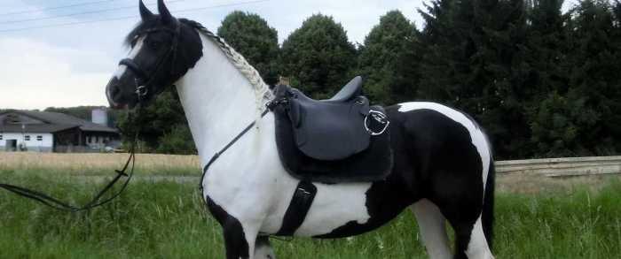 Zadel voor korte paarden