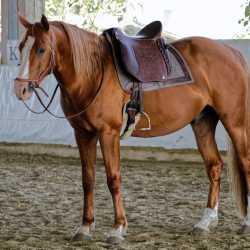 Dressage Andaluz with Montana imprint and stallion Golden Rus Vedus (Budjonny stallion)