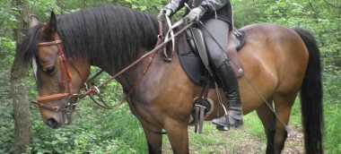 Saddle for trail riding