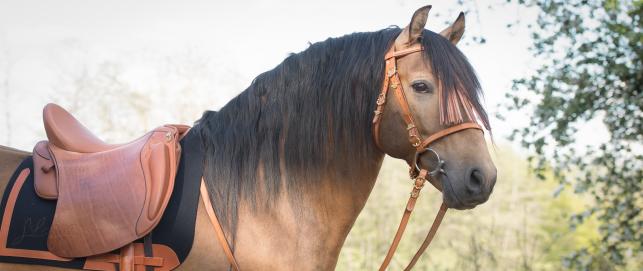 Sattel für breite Pferde